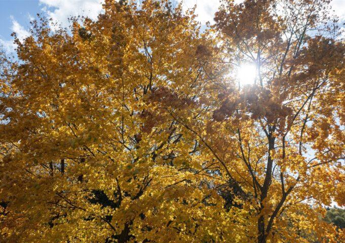 Herfst sfeerbeeld