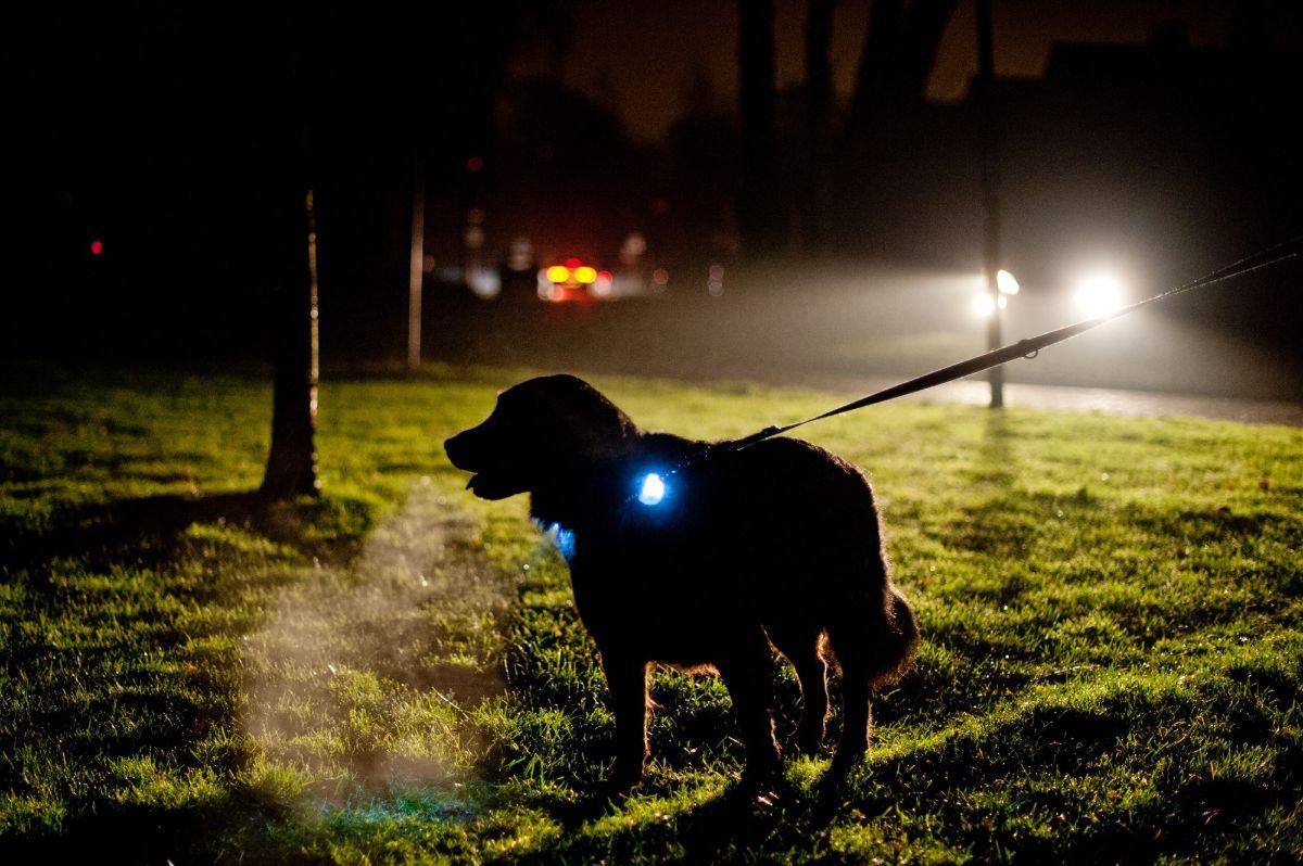 Hond uitlaten in het donker tijdens de avondklok