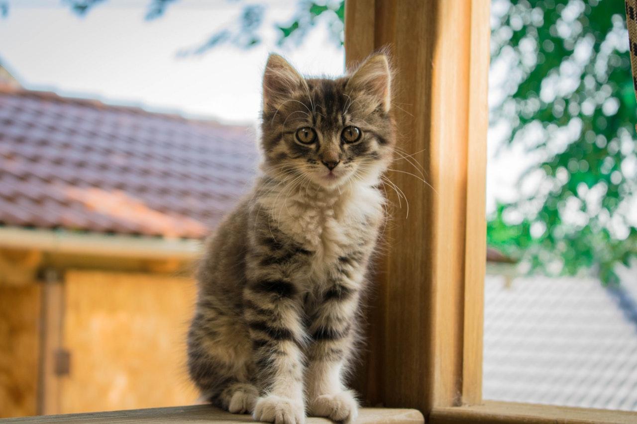 Praktijk Kattenwijsheid