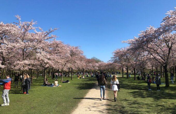 bloesempark