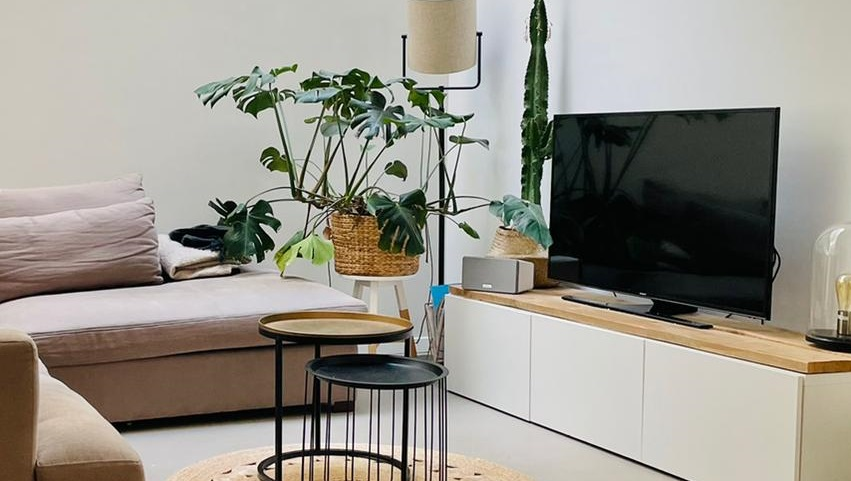 Planten Merel