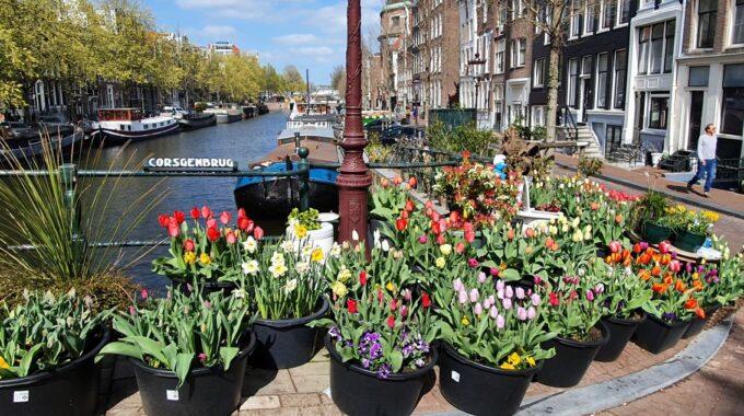 Gratis tulpen Amsterdam