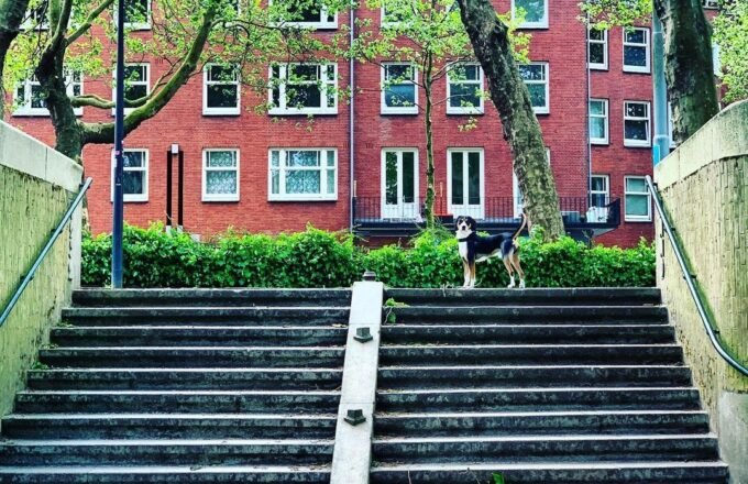Hond uitlaten Amsterdam