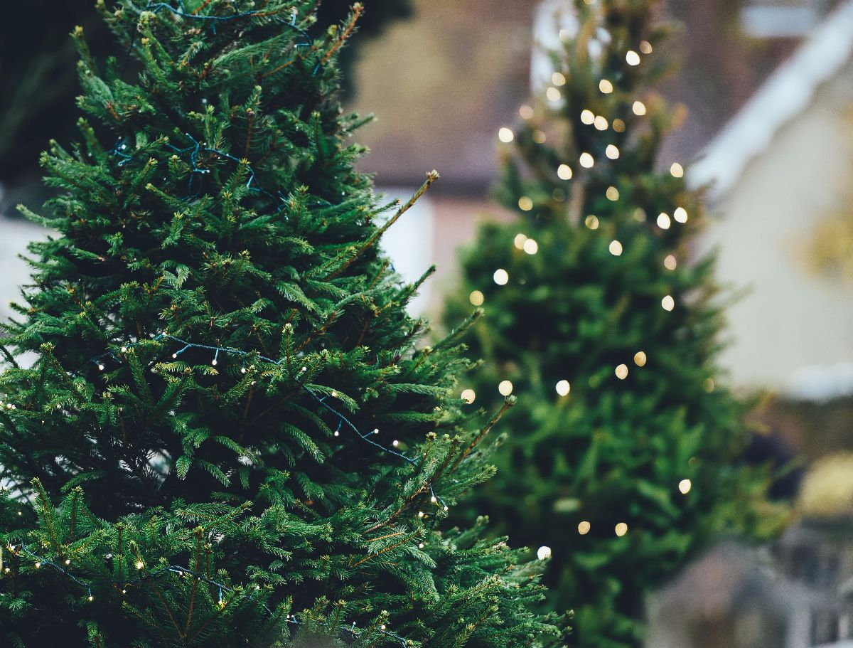 Kerstboom Apeldoorn