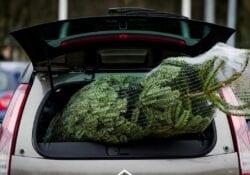 Anp kerstboom