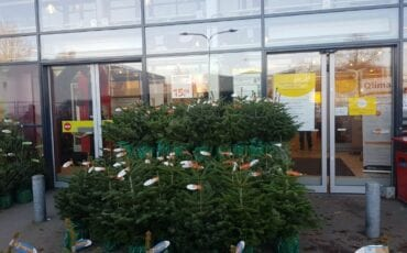 Praxis Kerstbomen