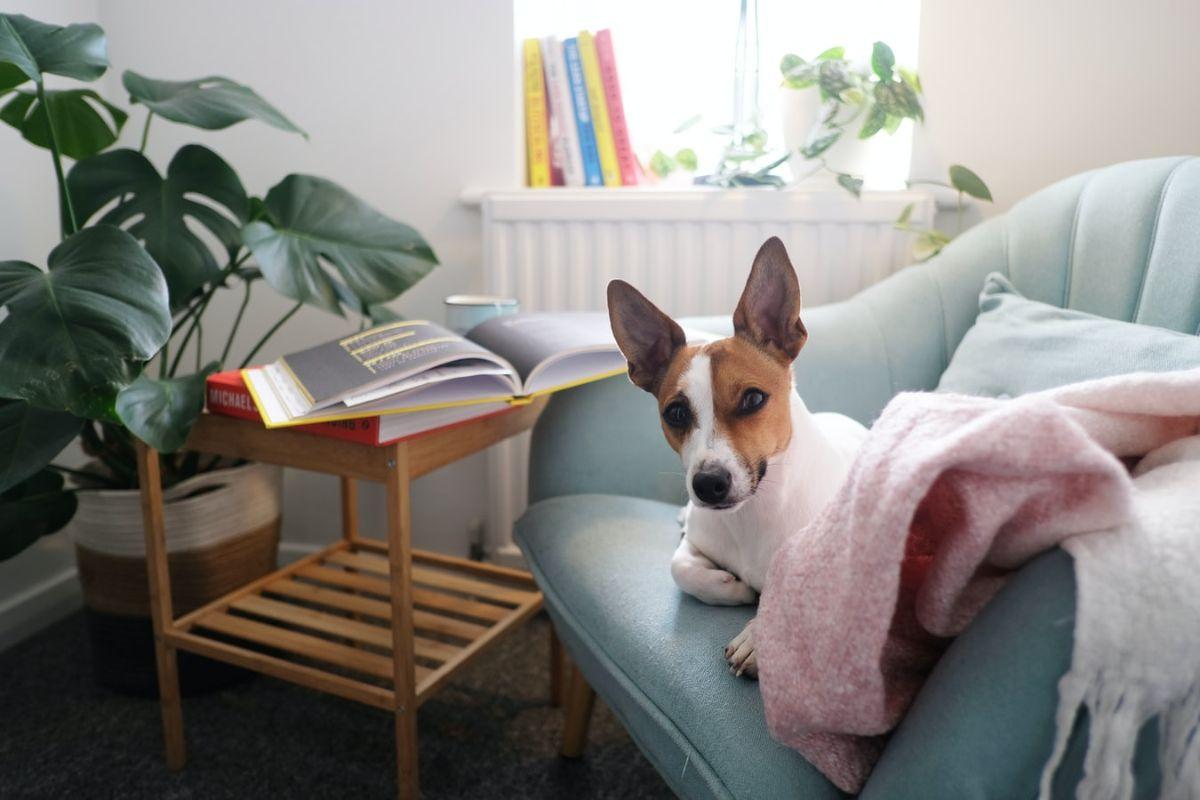 monstera woonkamer kamerplant hond