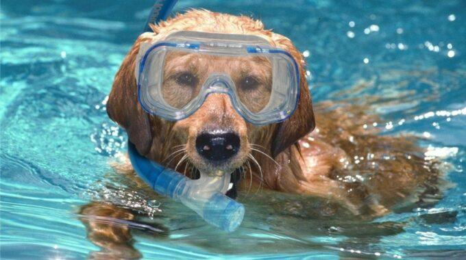 hondenzwemmen Apeldoorn