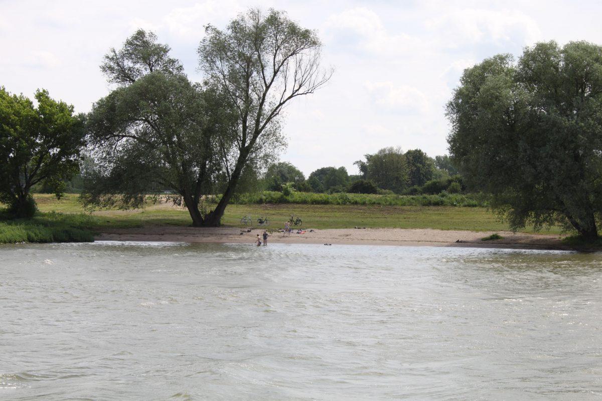 zwemmen natuurwater rijn