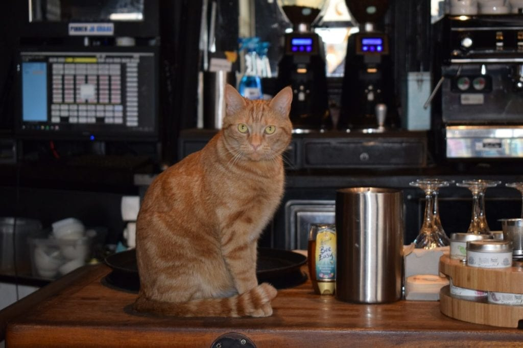 kroegkat henk cafe meijers