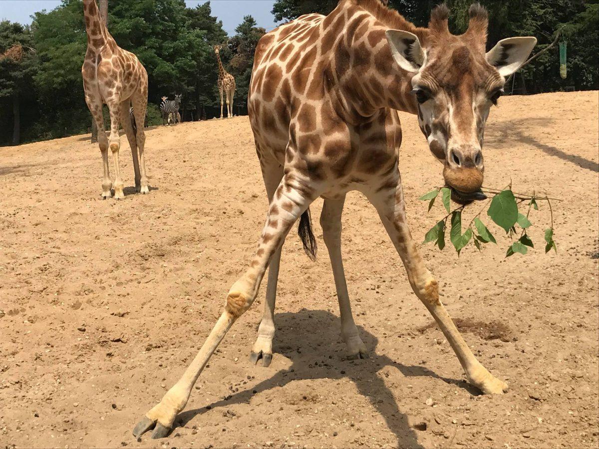 dierentuin arnhem first date