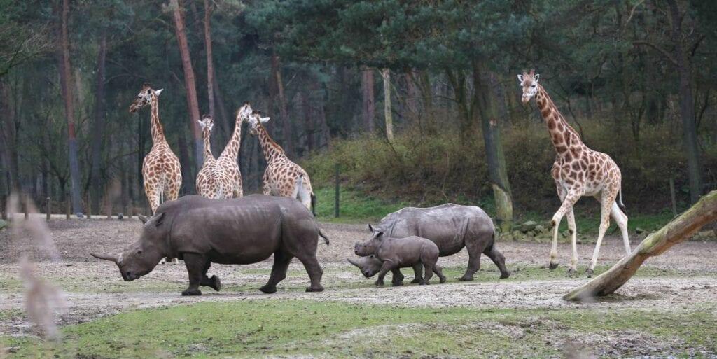 voordelig naar Burgers Zoo