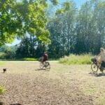 Bomen zorgen voor verkoeling in de zomer in Arnhem. Foto: indebuurt Arnhem