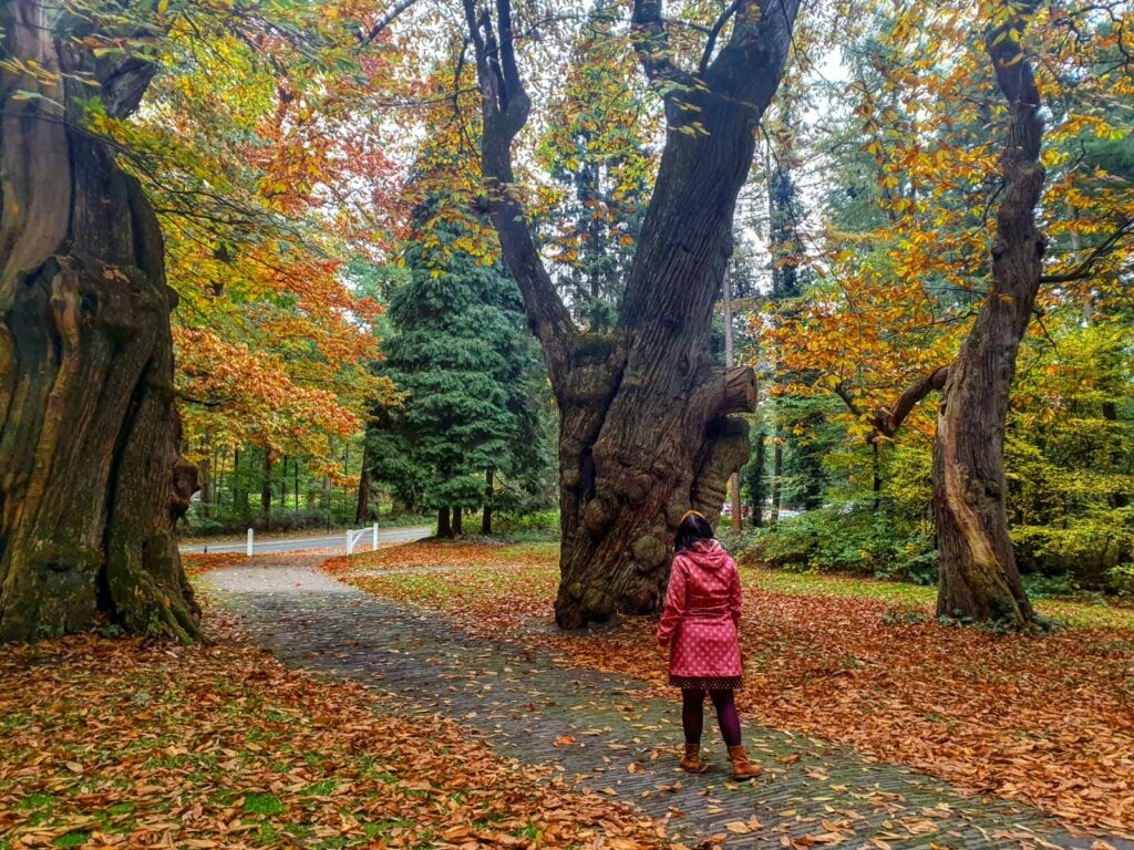 poortwachter bomen