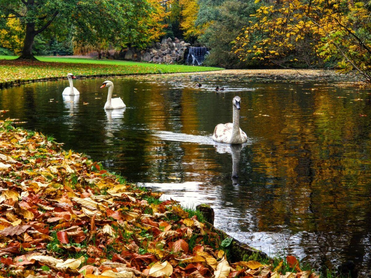Herfst in Sonsbeek