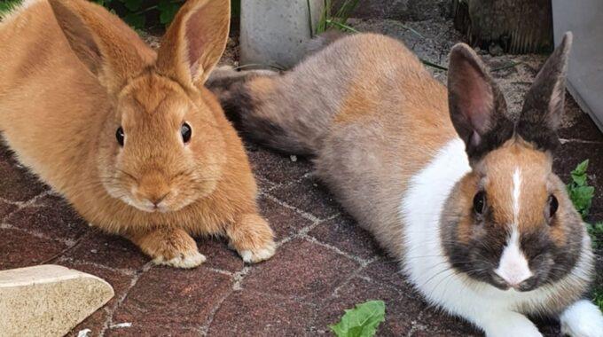 konijnen dierentehuis