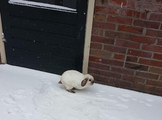 konijn in sneeuw