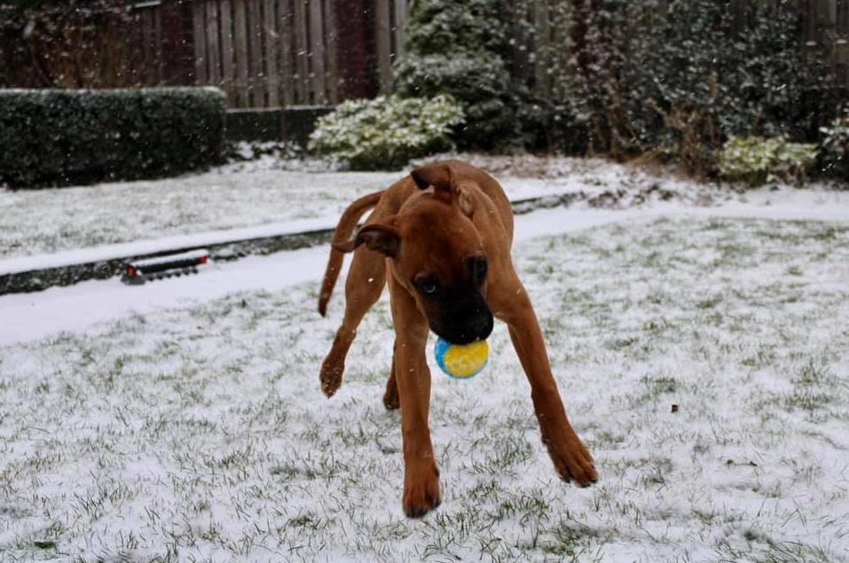 hond sneeuw