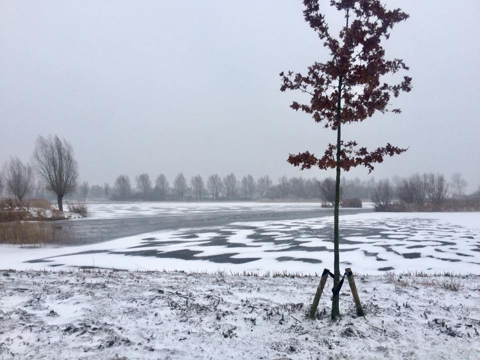 sneeuw plaat