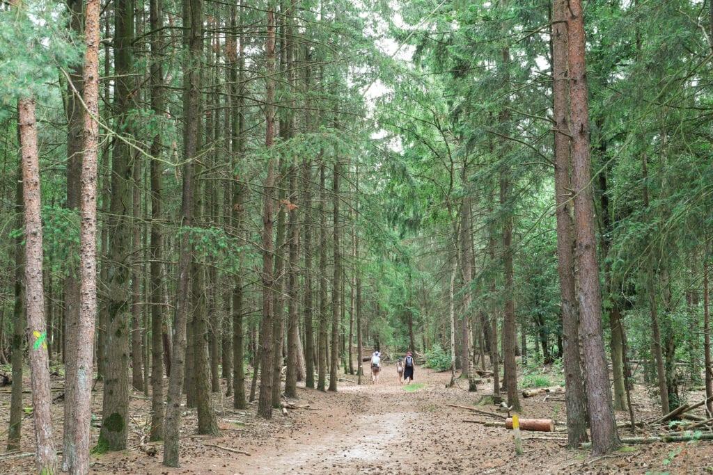 Bos bergen op zoom natuur groen bomen