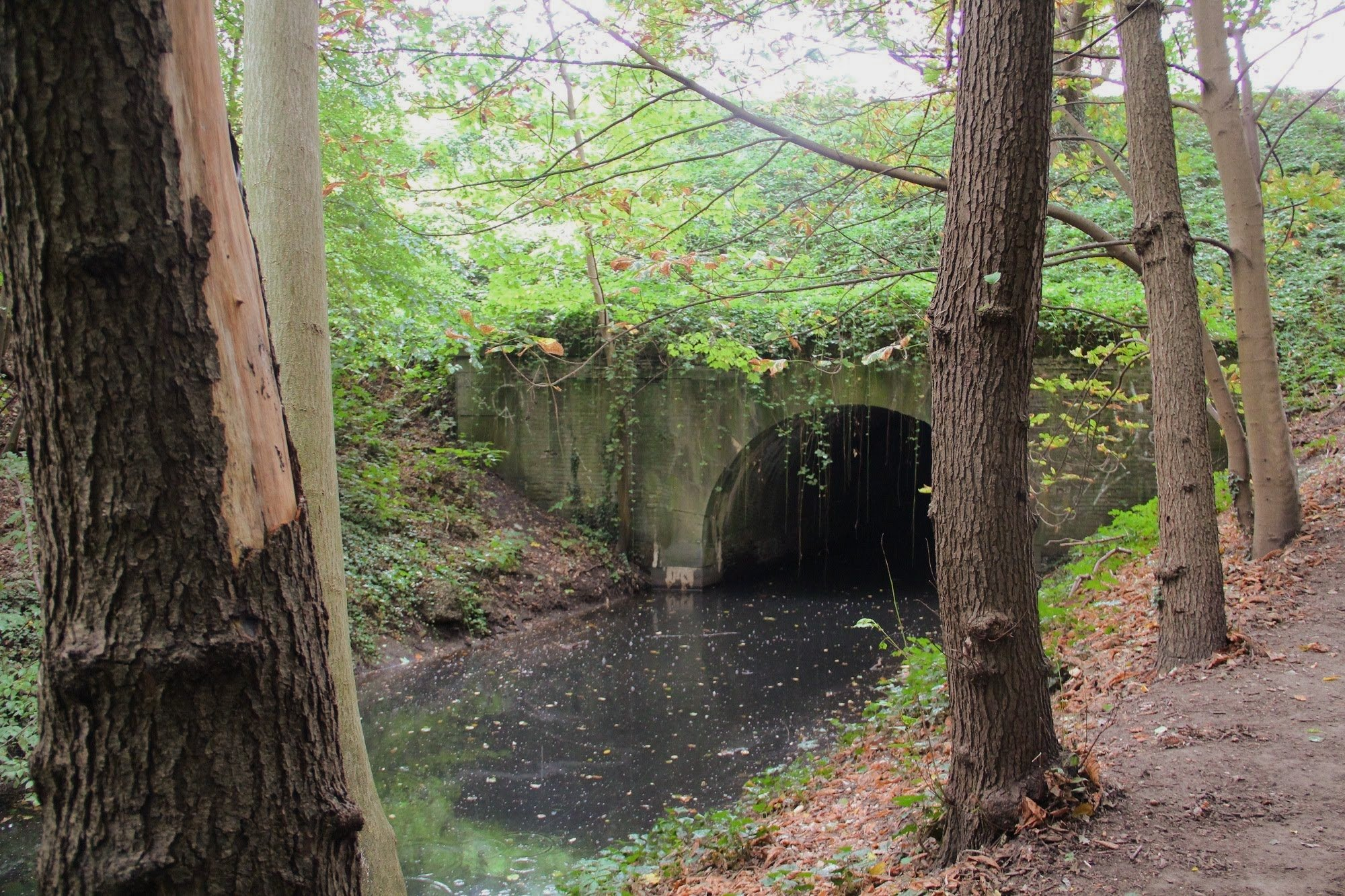 groen wandelen langs het water van de zoom natuur groen beekje water