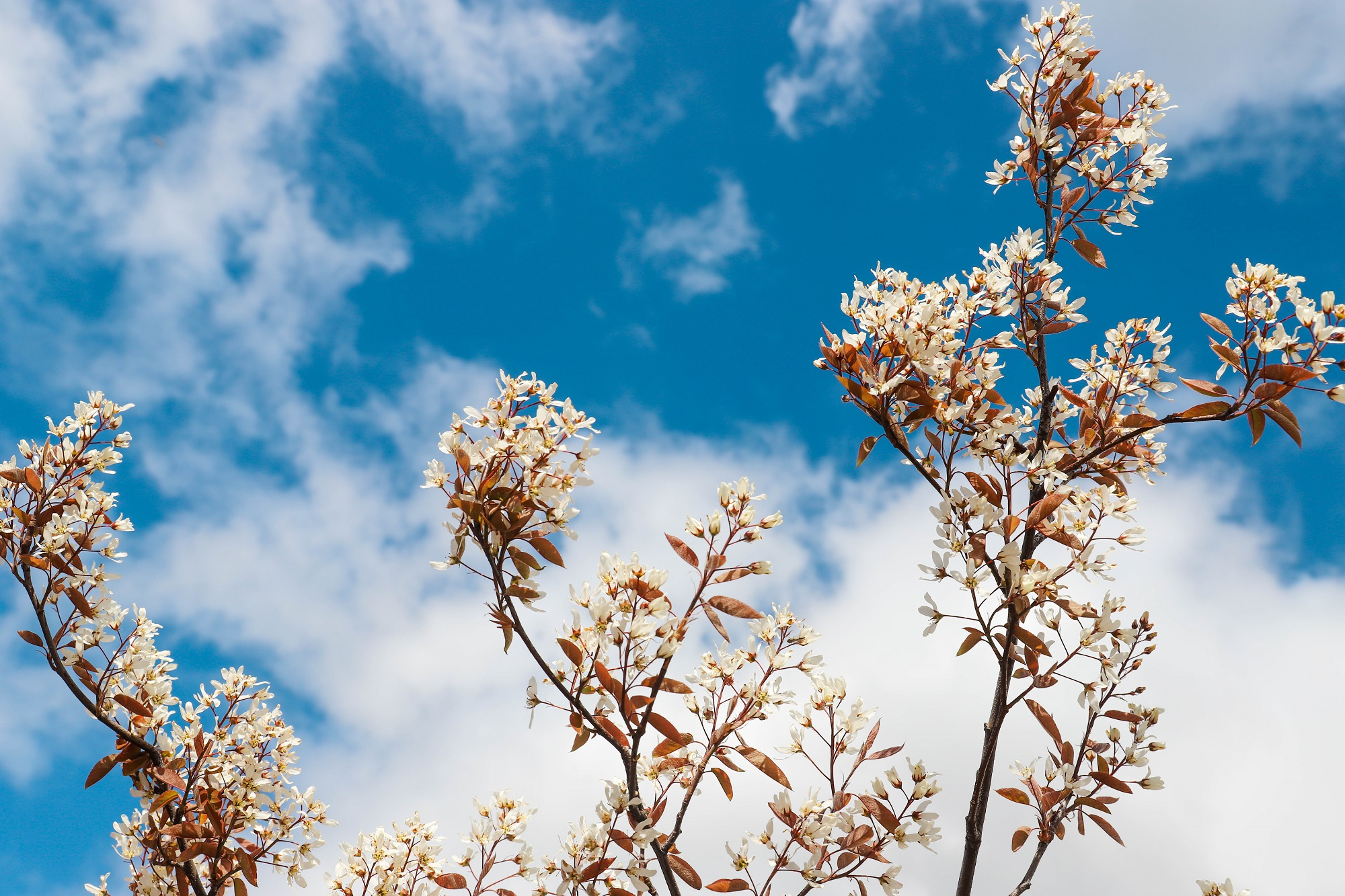 bloemen planten lente
