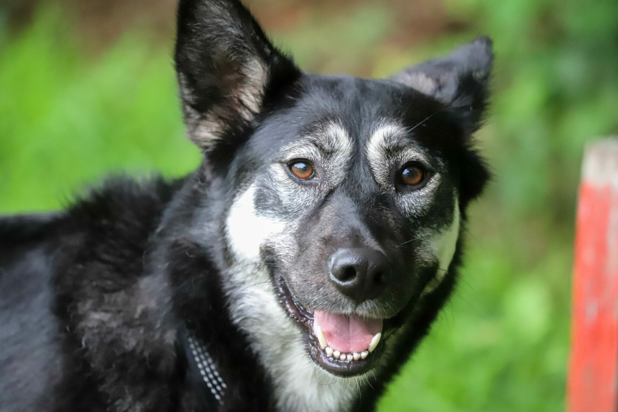 huisdieren huisdier bergen op zoom honden honden hondencursus puppy puppycursus huisdier huisdieren dier dieren