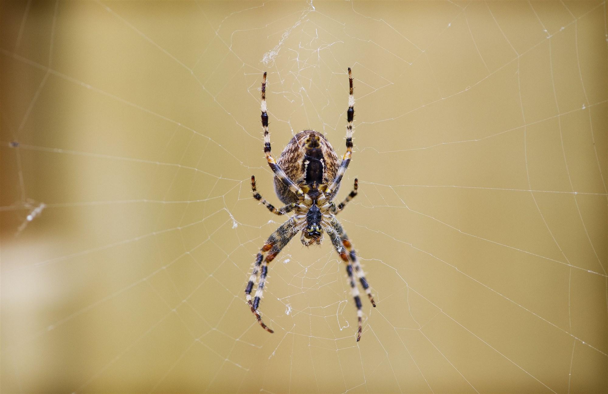 spinnen bergen op zoom spin
