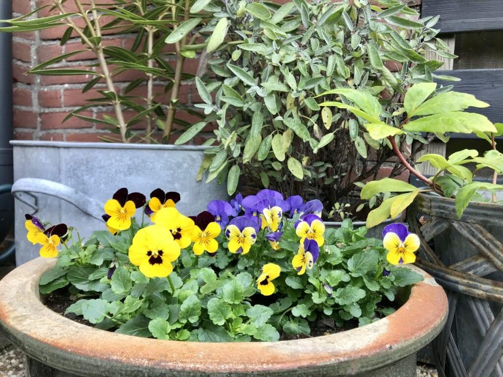 bloembollenlasagne fons