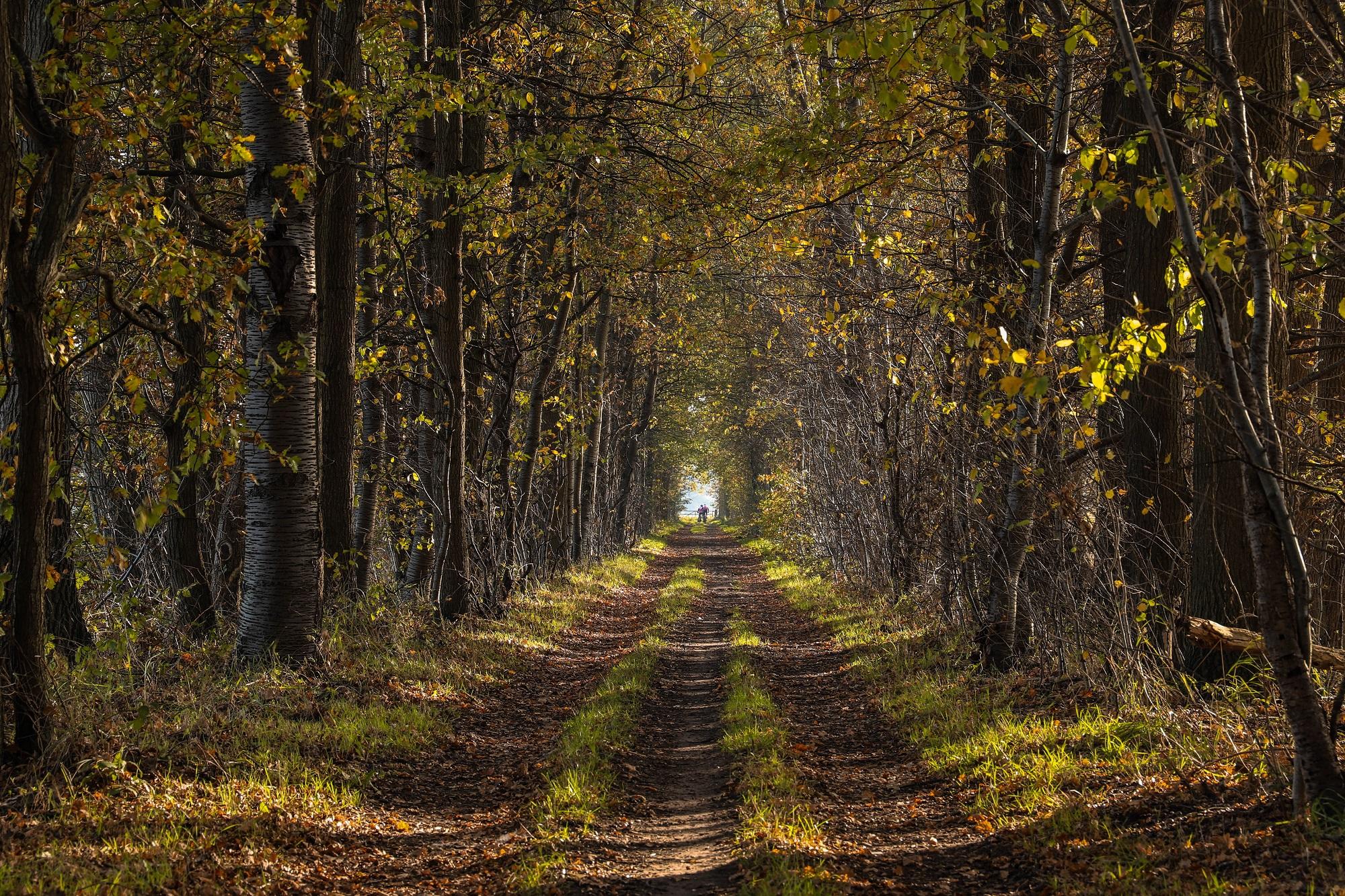 bos herfst bossen bergen op zoom mos bladeren pad