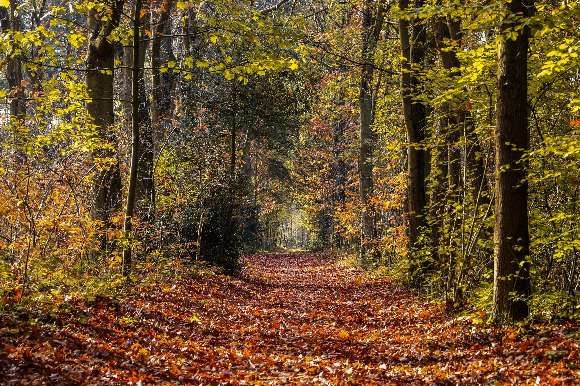 bos herfst bossen bergen op zoom mos bladeren