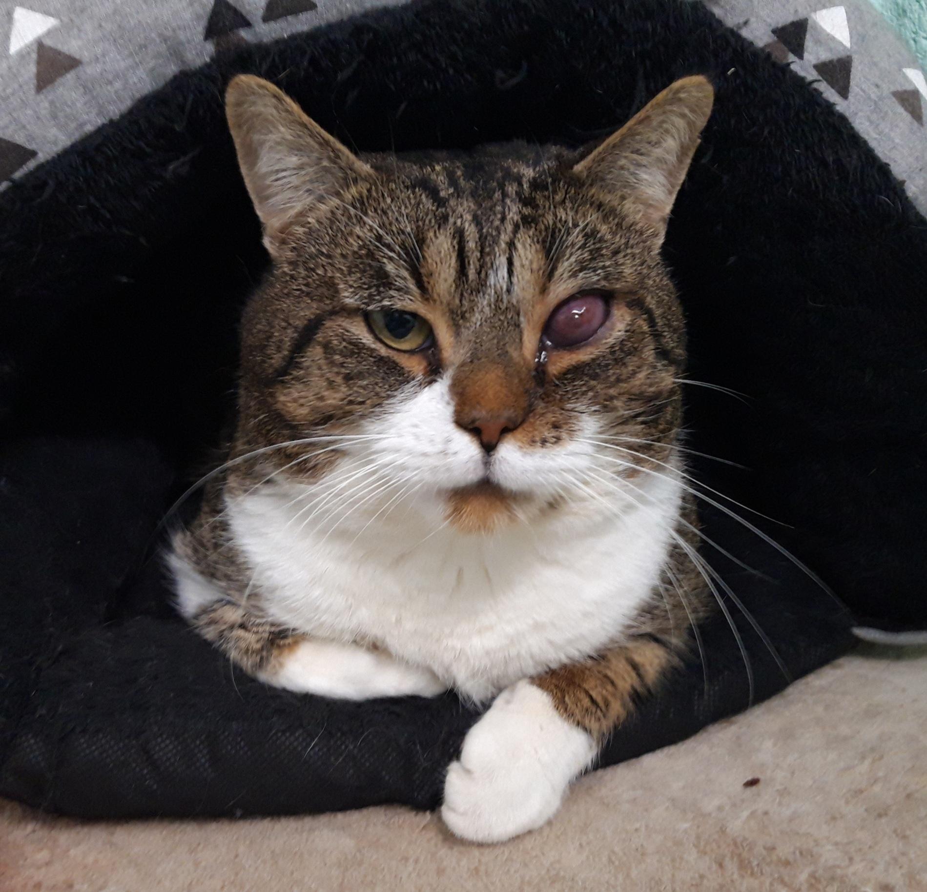 kat katten poes poezen huisdier huisdieren dierenasiel asiel arduin