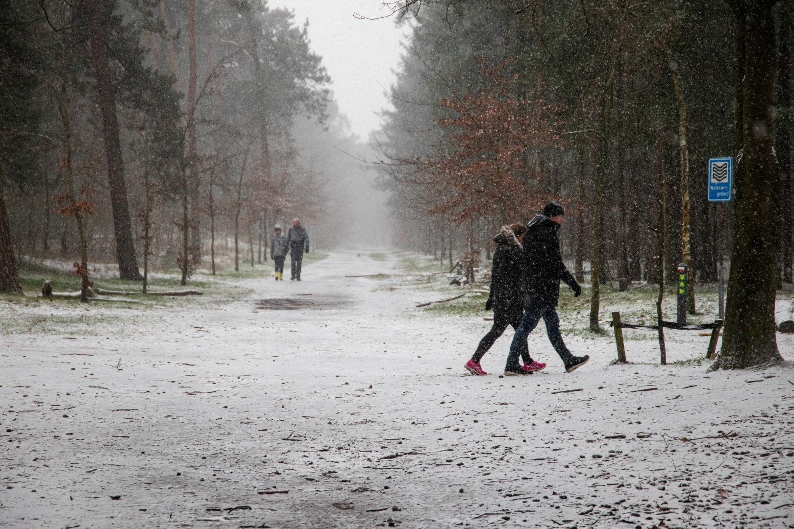 sneeuw bergen op zoom bos winter sneeuwen landgoed lievensberg wandelen