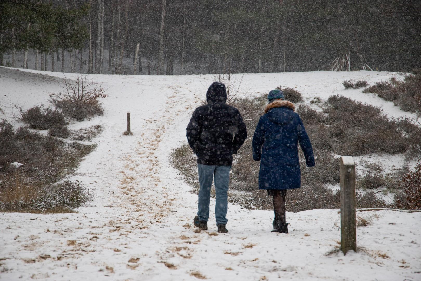 weersverwachting voor februari sneeuw bos winter sneeuwen landgoed lievensberg wandelen heide