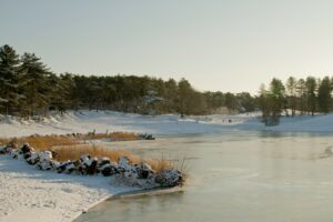 sneeuw winter winterwonderland bergen op zoom kou koud ijs sneeuwen natuur boom bomen