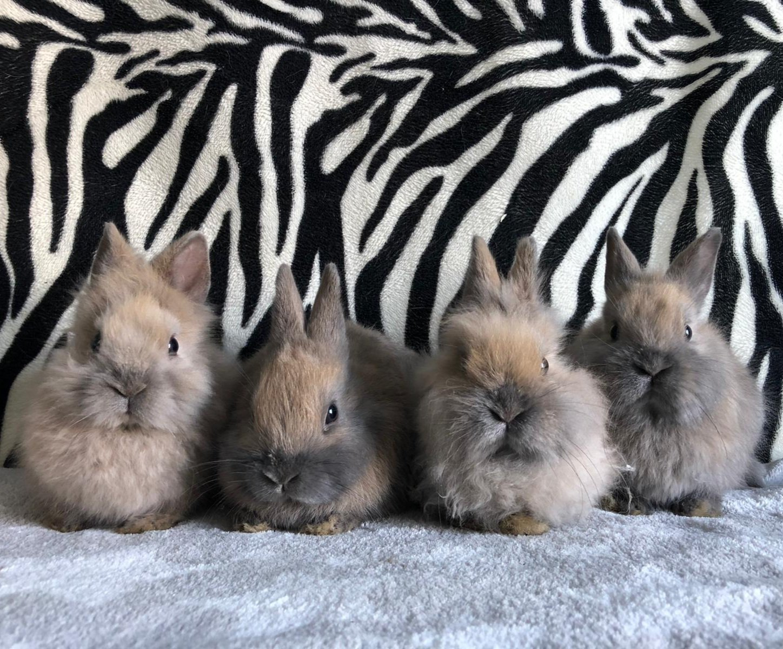 11-2jonge konijntjes konijnen konijn huisdier huisdieren dierenasiel Arduin
