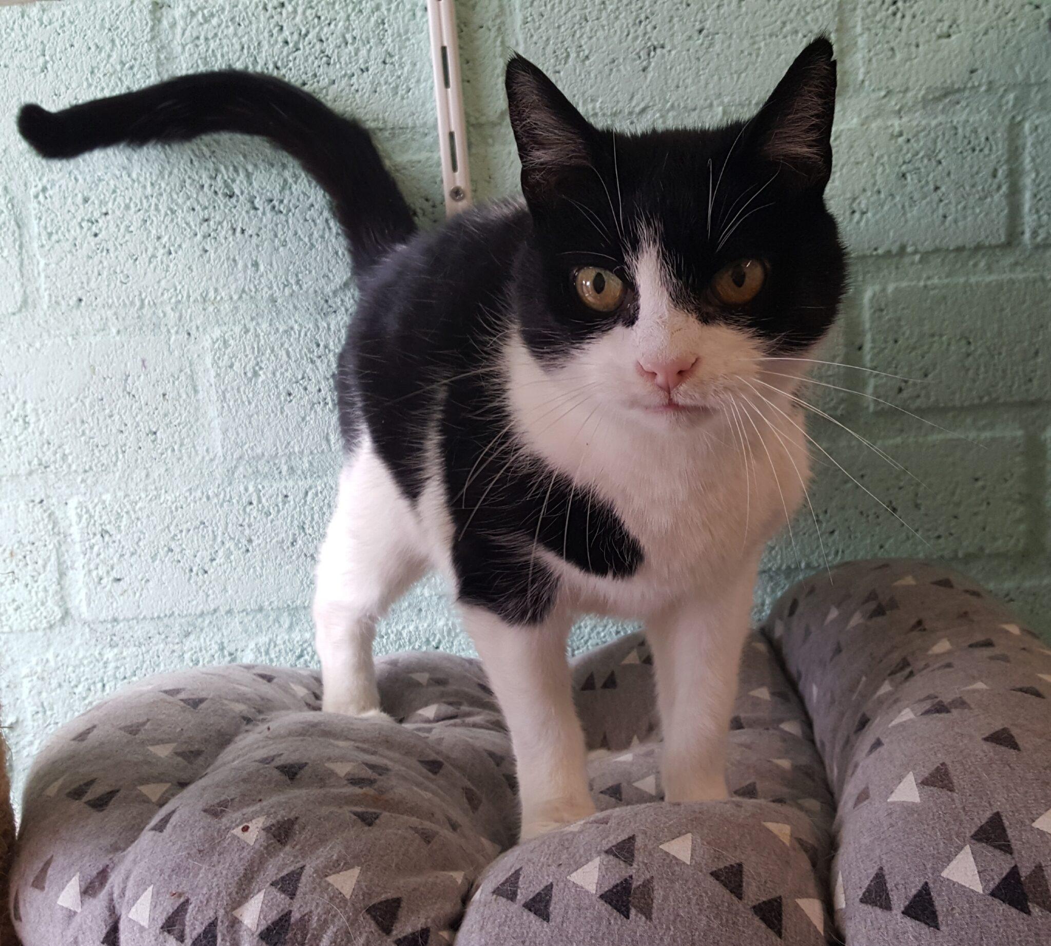 dierenasiel Arduin kat katten huisdier huisdieren poes poezen asiel