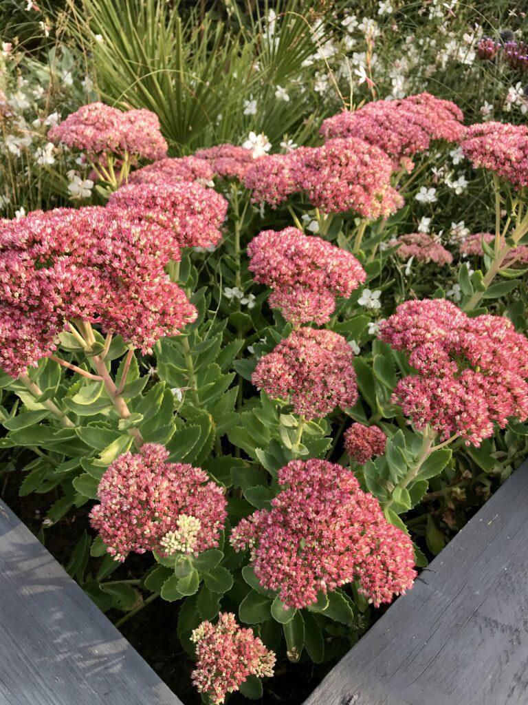 Fons de Schepper tuin tuinen tuinieren plant planten bloem bloemen