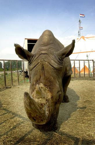 dier dieren neushoorn circus 2003