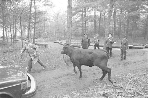stier bos dier dieren 1983