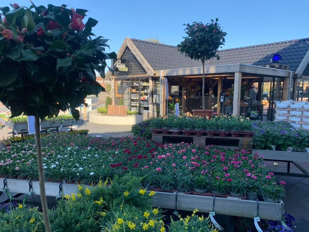 bloemen planten tuincentrum tuin tuinen tuinieren bloem bloemen boom bomen intratuin halsteren