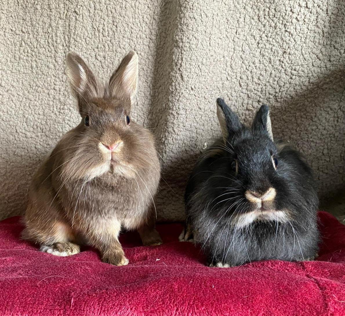 huisdier huisdieren konijn konijnen dierenasiel arduin