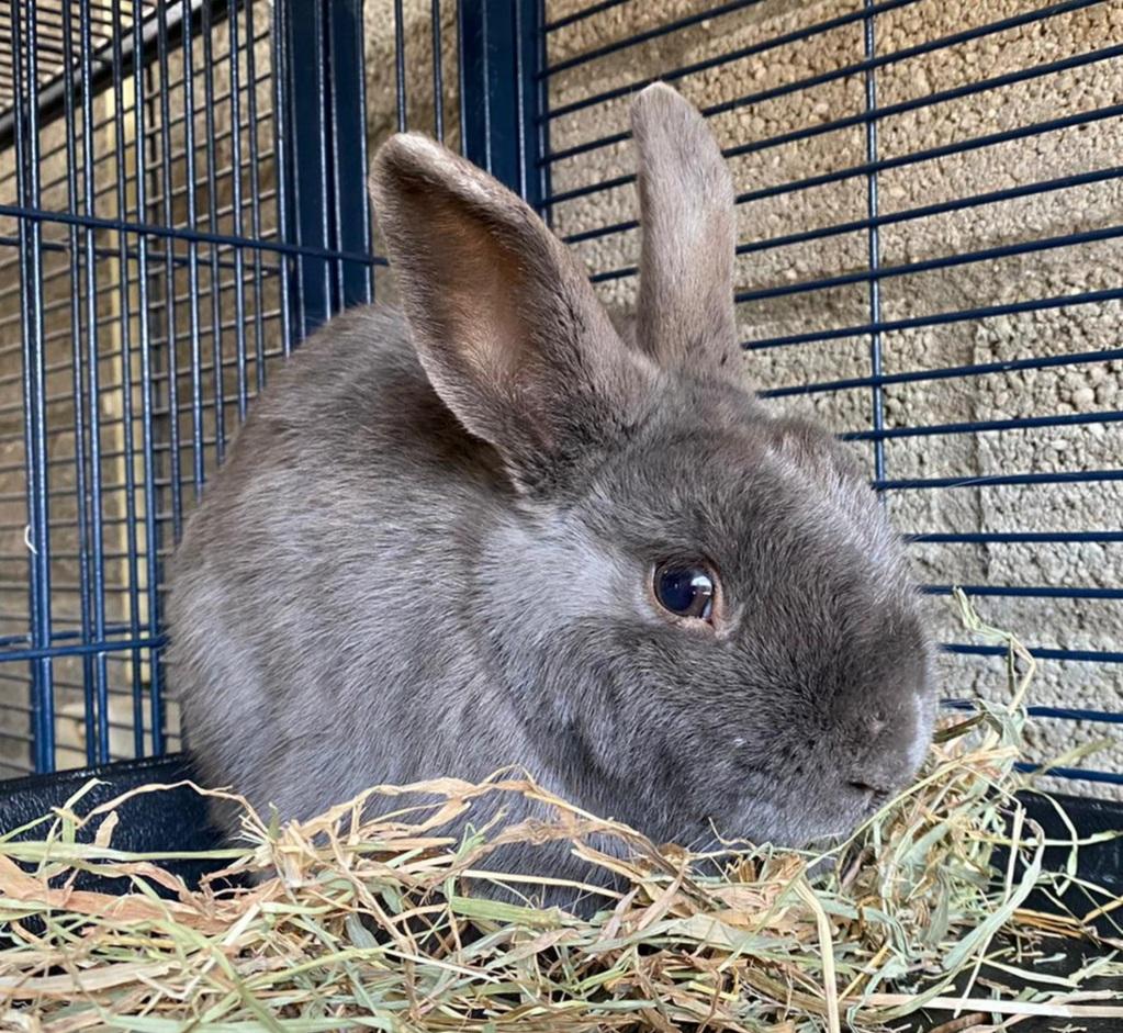 konijn konijnen huisdier huisdieren dier dieren dierenasiel arduin