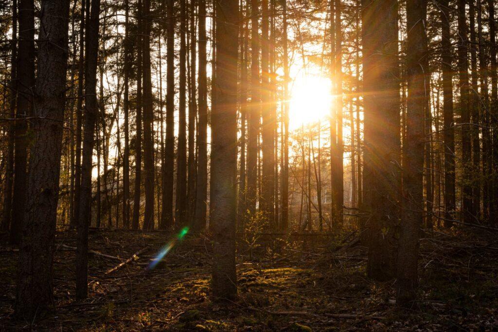 landgoed lievensberg zonsondergang zon golden hour goude uur bos takken tak