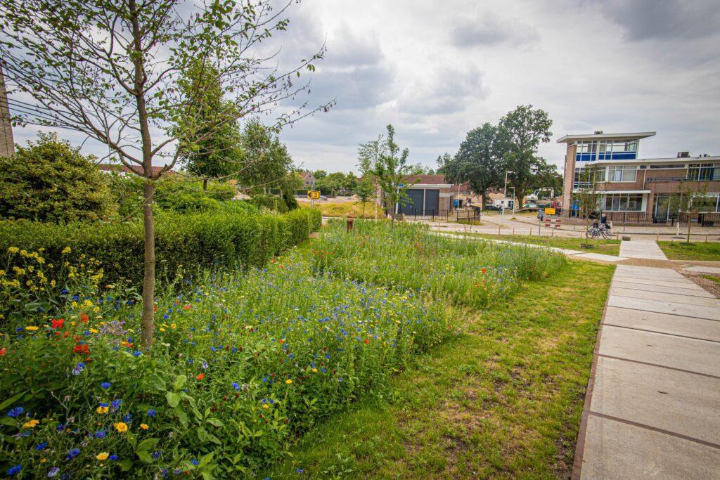 Opening park belvedere biodiversiteit bloemen natuur gras kinderen