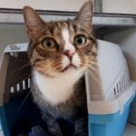 kat breda baasje gezocht