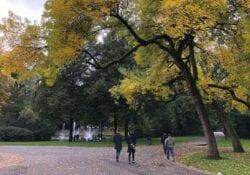 park valkenberg in herfst