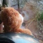 teddyberen breda