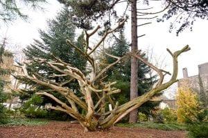 Een boom uit de botanische tuin TU Delft