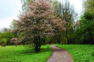 Arboretum Heempark Delftse Hout (3)